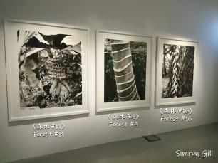Simryn Gill,《森林 #11》/《森林 #4》/《森林 #16》,1996至1998年,銀鹽照片 Simryn Gill, Forest #11 /Forest #4 /Forest #16, 1996-1998, gelatin silver print