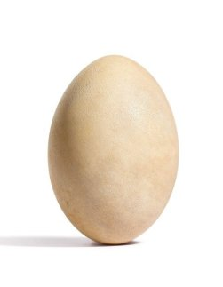 A Rare Elephant Bird Egg (Small)