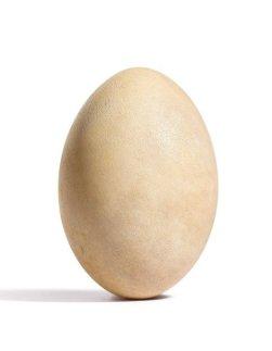A Rare Elephant Bird Egg (Small)